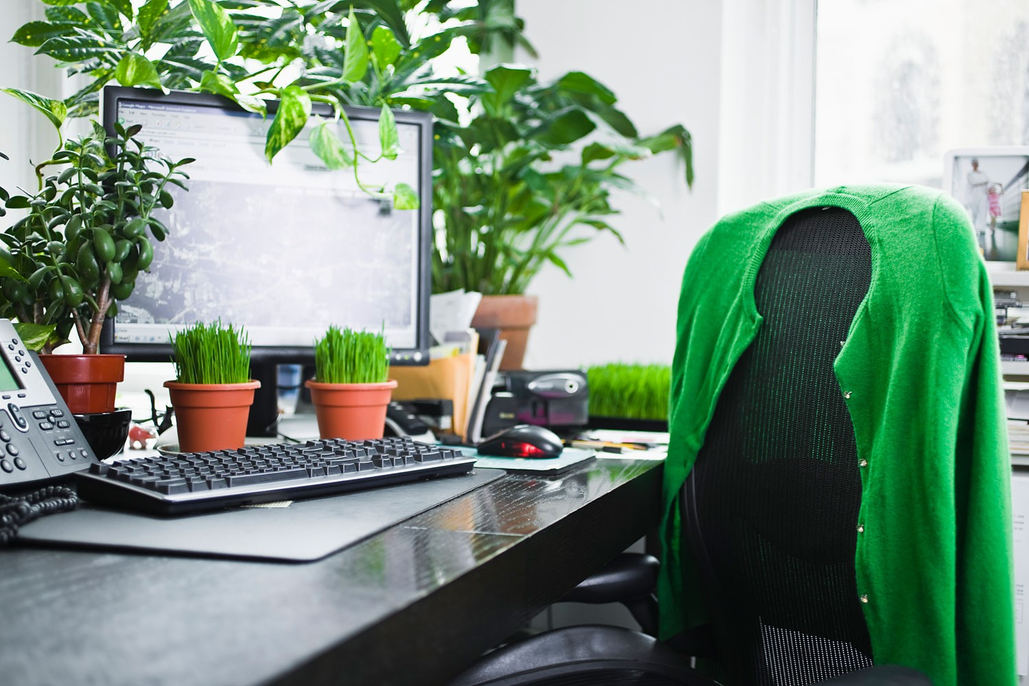5 Fab Indoor Plants For Your Office